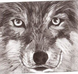 Wolf CD